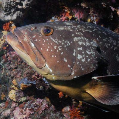 Submarinismo en Islas medason Xaloc Dive
