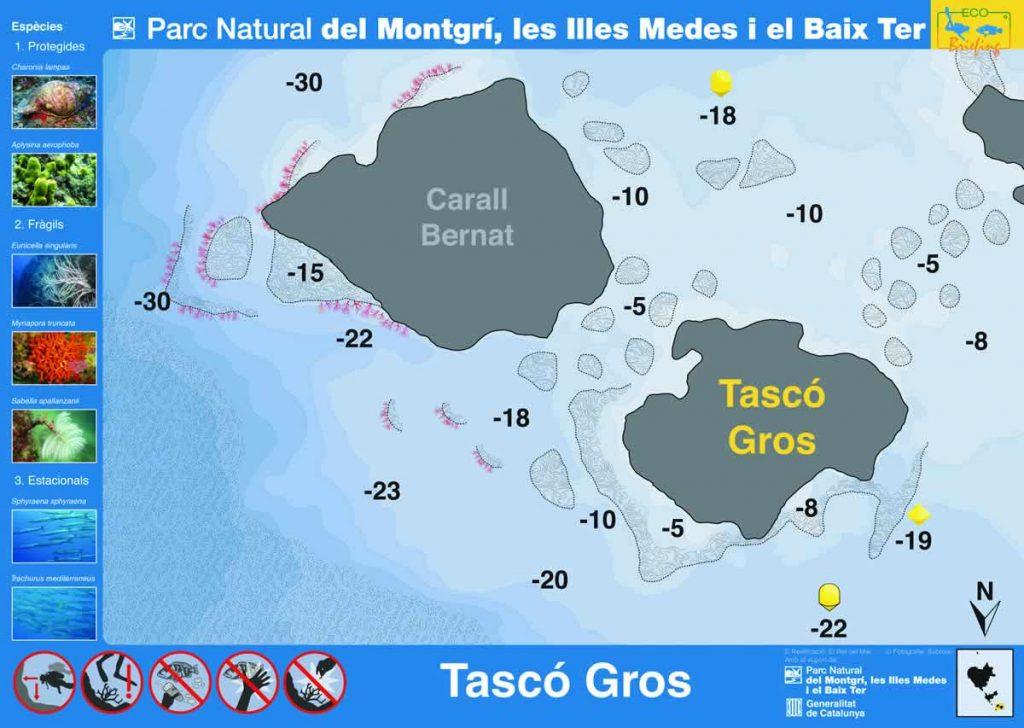 Punto de buceo Tasco Gros en las Islas Medas